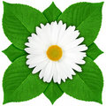 One white flower with green leaf Stock Image