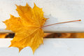 One yellow maple leaf on bench Royalty Free Stock Photo