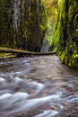Oneonta gorge trail in columbia river gorge oregon Stock Photography