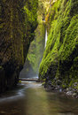Oneonta gorge trail in columbia river gorge oregon Stock Images