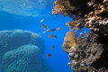 Onespot snapper on the coral reef Royalty Free Stock Photos