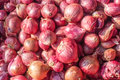 Onion or Allium cepa Royalty Free Stock Photo