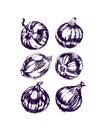 Onion bulbs illustration