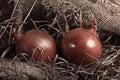 Onion farm burlap Royalty Free Stock Photo