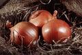Onion farm burlap egg chicken Royalty Free Stock Photo