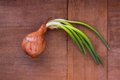 Onion with the greens Royalty Free Stock Photo