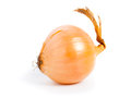 Onion one on white background Stock Images