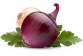 Onion vegetable bulb and parsley leaves still life isolated on white background cutout Stock Images