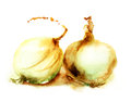 Onion watercolor illustration of two Stock Image