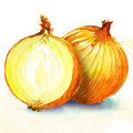 Onion watercolor painting on white background yellow Royalty Free Stock Photography