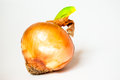 Onion on a white background with green part Royalty Free Stock Image