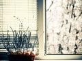 Onion at windowsill fresh spring season Royalty Free Stock Images