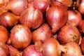 Onions bulp Royalty Free Stock Image