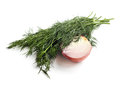 Onions and dill isolated on white background see my other works in portfolio Royalty Free Stock Photo