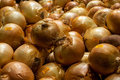 Onions on display t at farmer s market Royalty Free Stock Images