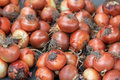 Onions at farmers market, Chile Royalty Free Stock Photo