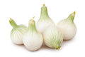 Onions white group on background Stock Photography
