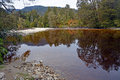 The oparara river near karamea new zealand reflections in water of west coast note amazing golden brown tea colour of Stock Image