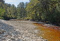 The oparara river near karamea new zealand west coast note amazing golden brown tea colour of water stained by tannin from Royalty Free Stock Photos