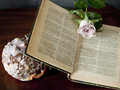 Open book with rose blossom and shell still life antique a pink as mark Stock Photo