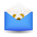 Open envelope with chamomile flower on a white background Stock Images