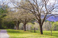 Open fields of Cades Cove in spring. Royalty Free Stock Photo