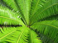 Open Green Fern Leaf Background Stock Photography