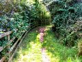 Open path bend and incline through shrubs Stock Photography