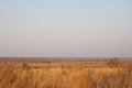 Open savannah at dusk in kruger national park in south africa Royalty Free Stock Photography