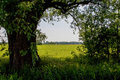 Open spot in hedge dark with view on light green grassy meadow Stock Images