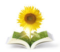 Open sun flowers growing book with wood Stock Image