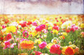 Open view of flowers field with textured vintage effect pic Stock Photo