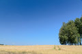 Open wheat field with trees in background - summer scene Royalty Free Stock Photo