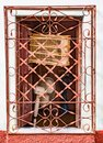 Open window with bird cage and fan behind orange painted metal g Royalty Free Stock Photo