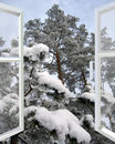 Open window to snowy winter forest Royalty Free Stock Photo