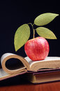 Opened book and apple red with leaves on table Stock Photos