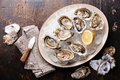 Opened Oysters on plate with ice and lemon Royalty Free Stock Photo