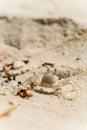 Opinião próxima o caranguejo no sandy beach em maldives Fotografia de Stock