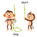 Opposite long and short illustration Royalty Free Stock Photo