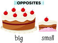 Opposite wordcard for big and small