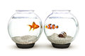 Opposites attract goldfish and clown fish showing curiosity concept Stock Image