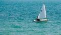 Optimist sailing Royalty Free Stock Photo