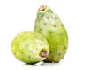 Opuntia ficus indica on white background Stock Images