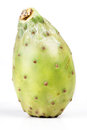Opuntia ficus indica on white background Stock Image