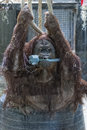 Orang utan monkey close up portrait at the zoo borneo while holding a dish brush in mouth Royalty Free Stock Image