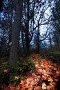 Orange Autumn Leaf Pathway through Dark Forest