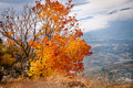 Orange autumn tree Stock Image