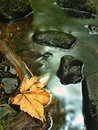 Orange beech leaves on mossy stone below increased water level blurred motion of blue waves around the Stock Images