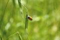 Orange Beetle Royalty Free Stock Photo
