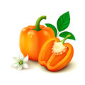 Orange bell pepper bulgarian pepper on white background whole with half flower and leaves vector illustration Stock Photo